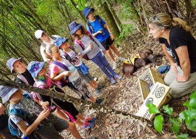 kiwi tracker (2)