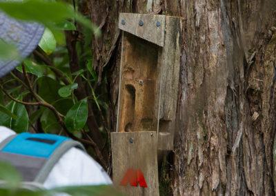 kiwi tracker (8)