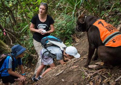 Exploring a kiwi burrow